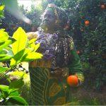 manzanas_pollos_y_quimeras_2