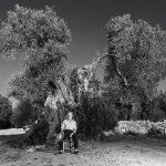 gruillermo-domeque-emo-las-oliveras-milenarias-pca-fotografia-seleccionado