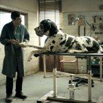 dogman_1